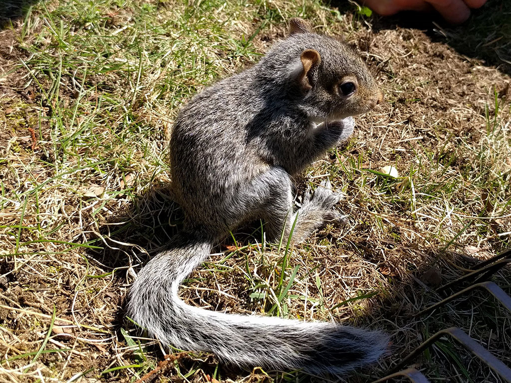 baby_squirrel_thumbnail
